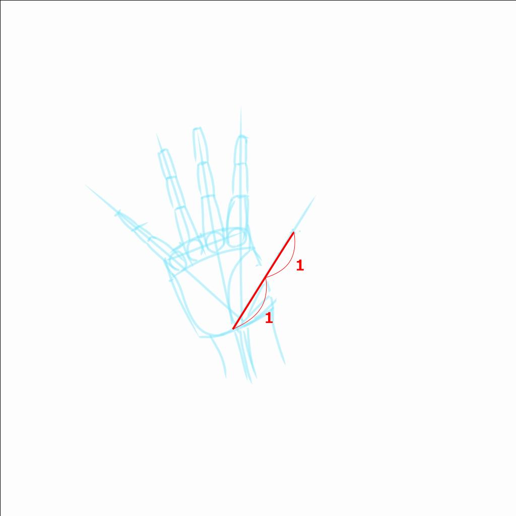 親指もまたサイズの基準